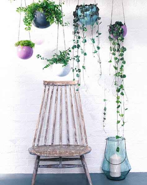 carnet d id es plante suspendu plantes retombantes v nement jardinerie truffaut. Black Bedroom Furniture Sets. Home Design Ideas