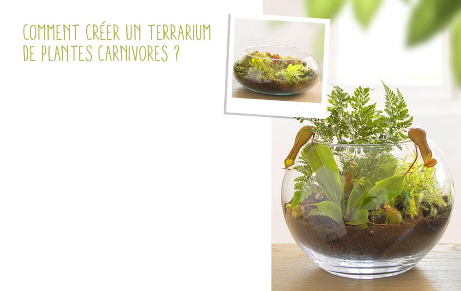 plante carnivore truffaut