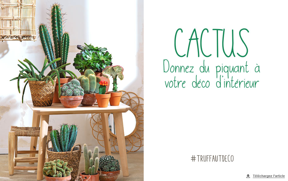 cactus d co d int rieur qui a du piquant carnet d id es jardinerie truffaut v nement. Black Bedroom Furniture Sets. Home Design Ideas