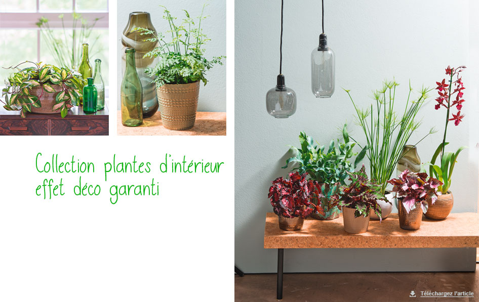 Plantes d int rieur la d co tendance de la rentr e for Idee deco plante interieur