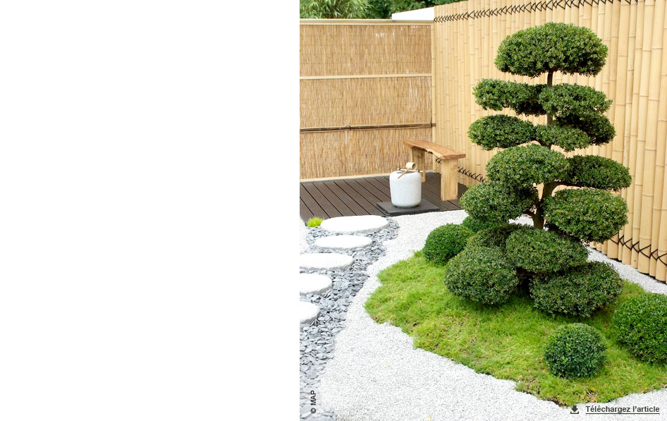 jardin de mousse helxine raoulia carnet d id es jardinerie truffaut v nement jardinerie. Black Bedroom Furniture Sets. Home Design Ideas